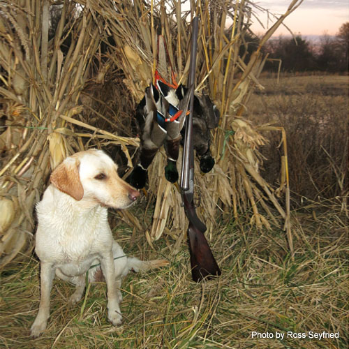 Man and Wildlife Food Plot Seed - Duck Mix