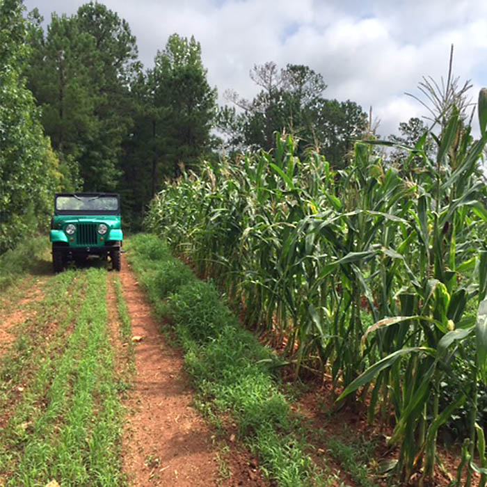 Man and Wildlife Food Plot Seed - Spring Mix
